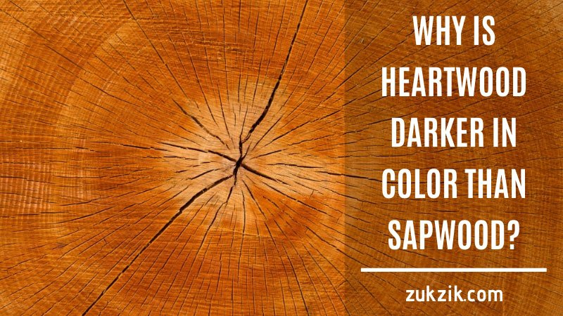 why is heartwood darker in color than sapwood