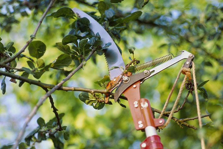 best manual pole saws